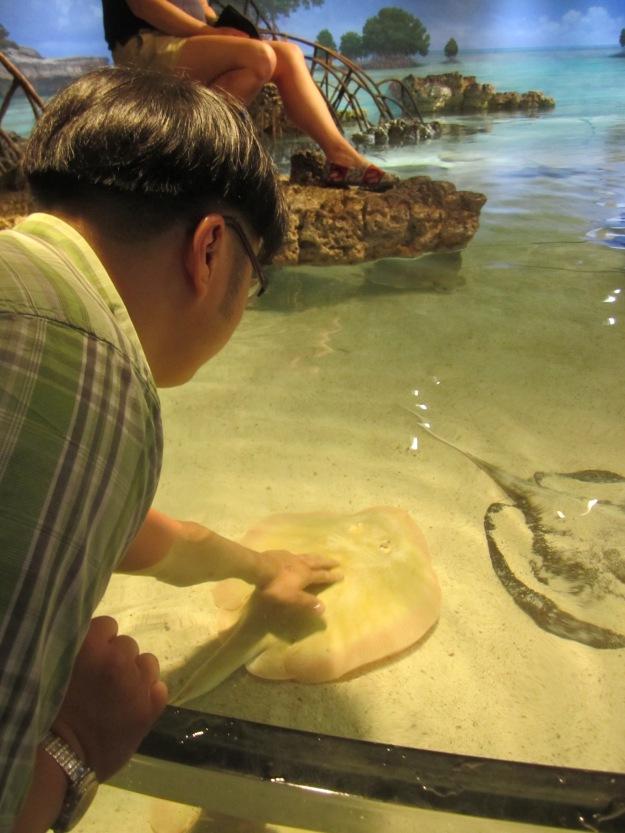 Petting manta rays