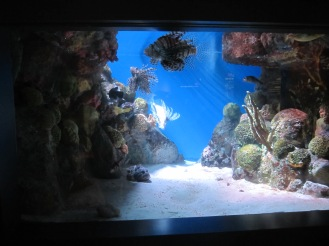 The Aquarium (10)
