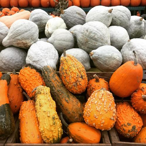 So...many...pumpkins...